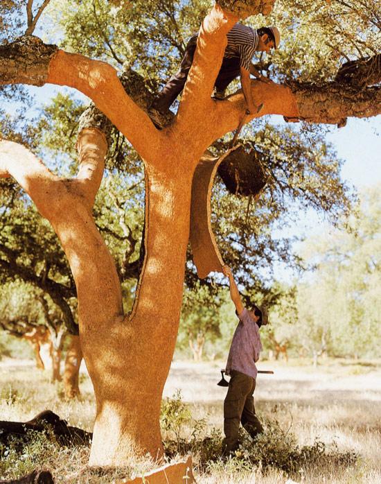 Снятие коры пробкового дуба
