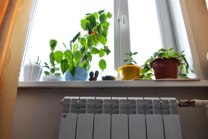 Цветы на подоконнике пластикового окна